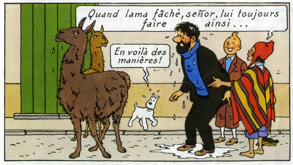 Bordeaux - Ivres, ils ont voulu faire découvrir le tramway à un lama. Lama